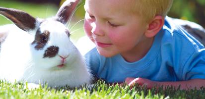 Kanin och pojke