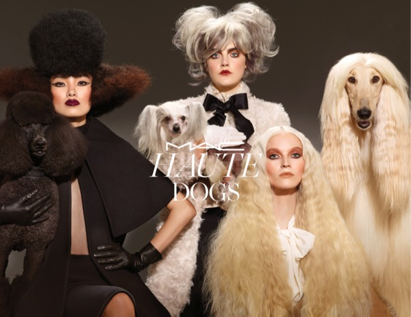 HAUTE DOGS1.jpg