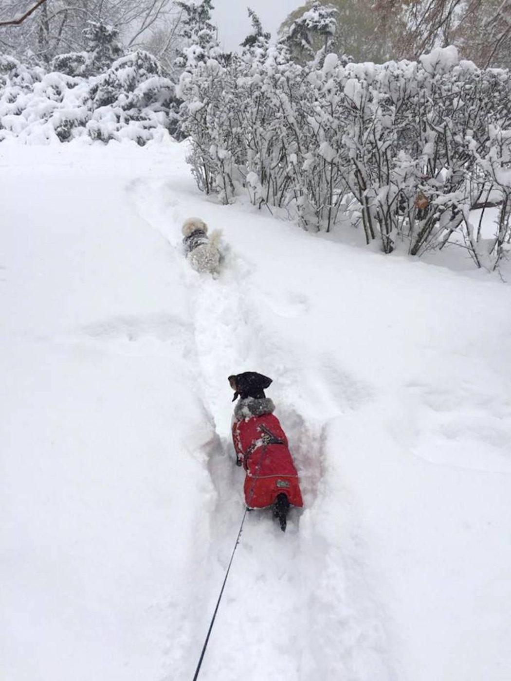 snostorm-och-hundpromenad